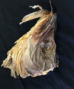 Icelandic-Stockfish-Heads-1.5-lbs-300×360-e1462544626292.jpg